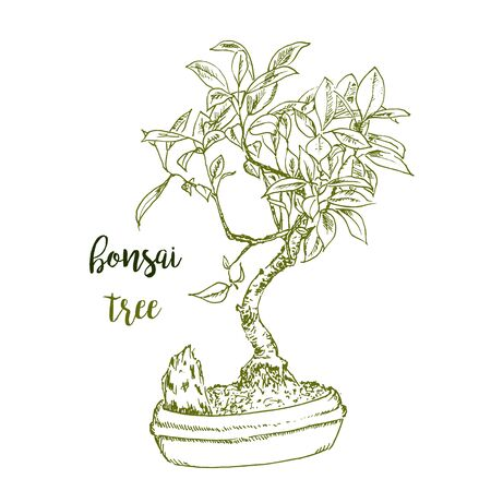 Bonsai hand drawn sketch, Japanese traditional art planting in flowerpot vector isolated illustration. Bonsai apple tree in pot, home gardening. Stock Illustratie