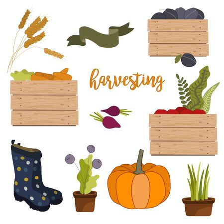 Harvesting collection of autumn and fall elements, pumpkin, wood box of fruits and vegetables harvest, branch, berry cartoon isolated on white vector illustration.