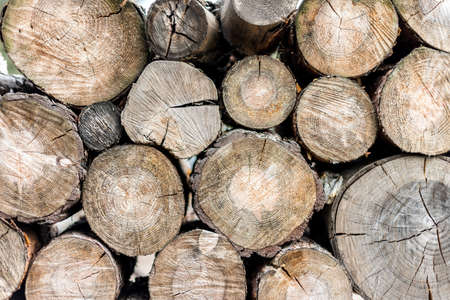 Woodpile in a forest. Close up view, rustick eco background Standard-Bild - 96148941