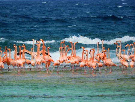 Los Roques, Caribbean Beach: Flamingos on the beach. Fantastic animal view. Great landscape 版權商用圖片 - 116692932