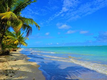 Travel vacation tropical destination. Palm tree beach landscape. Travel vacations destination. Travel concept. Perfect vacation landscape. Lonely palm on the beach. Travel lifestyle vacation destination. Palm tree. Vacations. Standard-Bild - 117100778