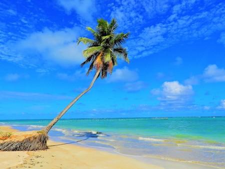 Travel vacation tropical destination. Palm tree beach landscape. Travel vacations destination. Travel concept. Perfect vacation landscape. Lonely palm on the beach. Travel lifestyle vacation destination. Palm tree. Vacations. Standard-Bild - 117100820