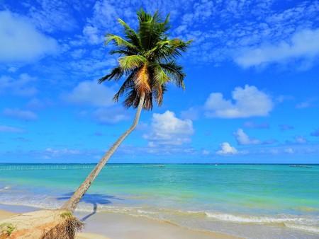 Travel vacation tropical destination. Palm tree beach landscape. Travel vacations destination. Travel concept. Perfect vacation landscape. Lonely palm on the beach. Travel lifestyle vacation destination. Palm tree. Vacations. Standard-Bild - 117100902