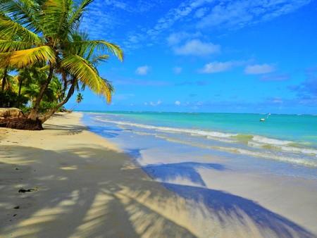 Travel vacation tropical destination. Palm tree beach landscape. Travel vacations destination. Travel concept. Perfect vacation landscape. Lonely palm on the beach. Travel lifestyle vacation destination. Palm tree. Vacations. Standard-Bild - 117100906