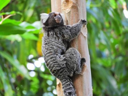 Monkey in nature. Great wild scene. Wild life. Standard-Bild - 117100949