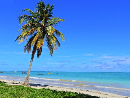 Travel vacation tropical destination. Palm tree beach landscape. Travel vacations destination. Travel concept. Perfect vacation landscape. Lonely palm on the beach. Travel lifestyle vacation destination. Palm tree. Vacations. Standard-Bild - 117104732