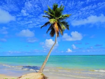 Travel vacation tropical destination. Palm tree beach landscape. Travel vacations destination. Travel concept. Perfect vacation landscape. Lonely palm on the beach. Travel lifestyle vacation destination. Palm tree. Vacations. Standard-Bild - 117104734
