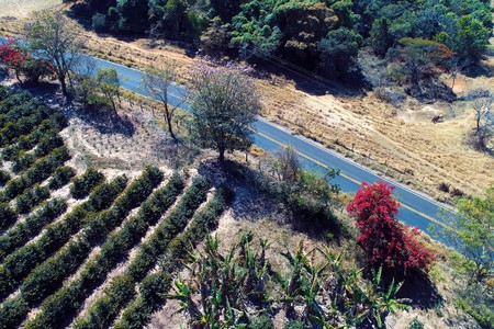 Aerial view of rural and agriculture scenes. Beautiful background. Great countryside view.