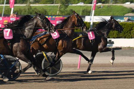 210530 - Elitloppet trotting event at Solvalla track in Stockholm Sweden. High quality photo