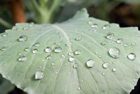 drops of water on green leaf Stock Photo