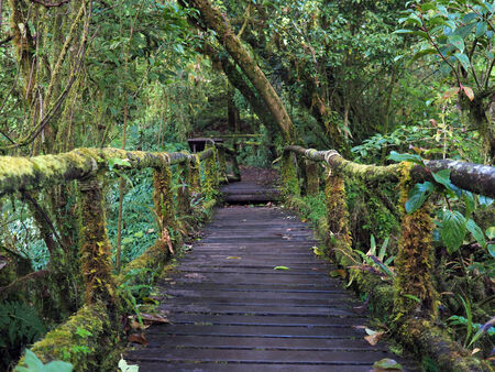 Wooden footpath in Deep tropical rainforest photo