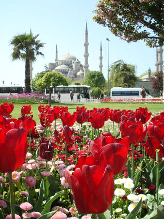 ottoman: The Ottoman Tulips and Sultanahmet Mosque Background