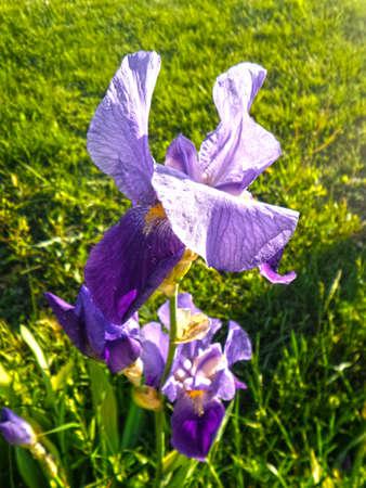 purple flowers: Purple Flowers Background