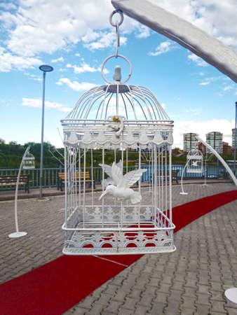 captivity: Bird Cage