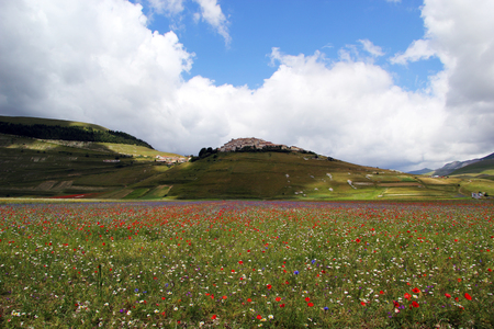 Fields of flowers in blooming time