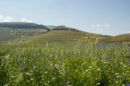 Blossoming time in Castelluccio di Norcia, Italy