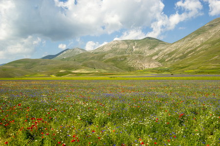 Blossoming time in Castelluccio di Norcia, Italy
