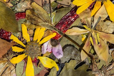 Herbarium composed of autumn dried leaves and flowers