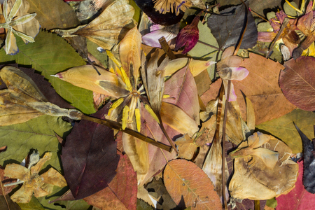 Herbarium composed by autumn colored leaves and flowers Stock fotó