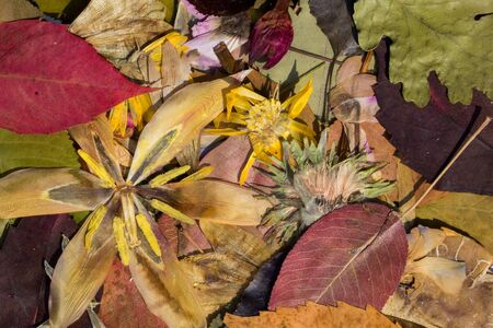 Herbarium composed by autumn colored leaves and flowers Imagens