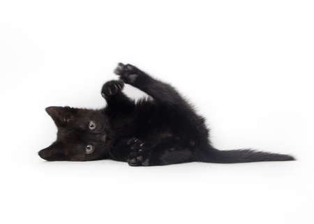 cats playing: black kitten isolated on white background