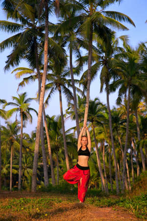 Beautiful woman in red Indian trousers doing tree pose vrikshasana surrounded by palm tree forest. India, Kerala Stock Photo - 9231923