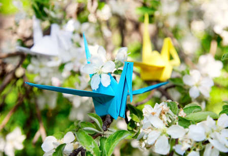Three origami paper cranes: yellow, white and blue are sitting on the branch of blooming tree. One in focus and another are not. White flowers around photo