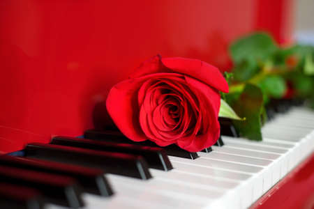 Red rose lying on keys of red grand piano with free space for text