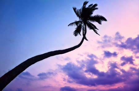 Silhouette of Palm tree at purple sky background in India  Stock Photo - 10120490