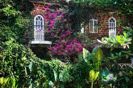 ivies: Casa con due finestre e balconi con piante e fiori magenta intorno a Goa, India Archivio Fotografico