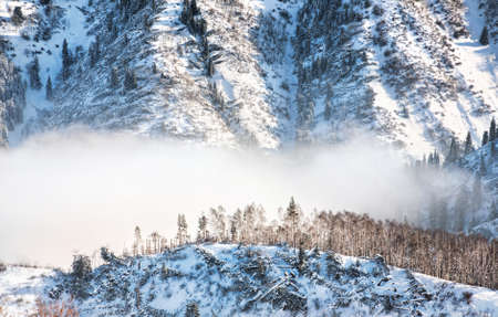 Felling forest in mountain with fog in winter time in Zaili Alatau Kazakhstan photo