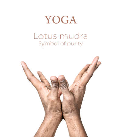mudra: Hands in lotus mudra by Indian man isolated at white background. Gesture of purity. Free space for your text and can be used in articles about mudras