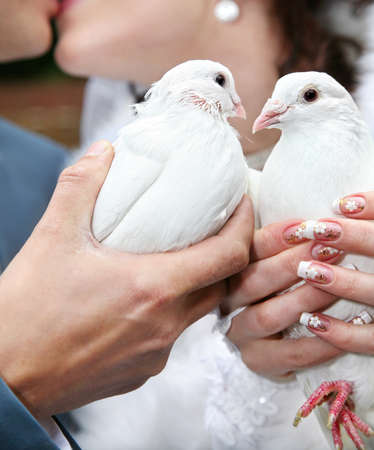 Two pigeons in hands of kissing couple on wedding day photo