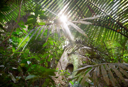 Sunlight in the jungle of Ponmudi park in Kerala, India photo