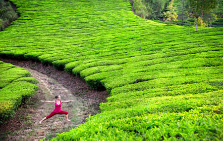 agriculture india: Yoga virabhadrasana II warrior pose by woman in red cloth on tea plantations in Munnar hills, Kerala, India