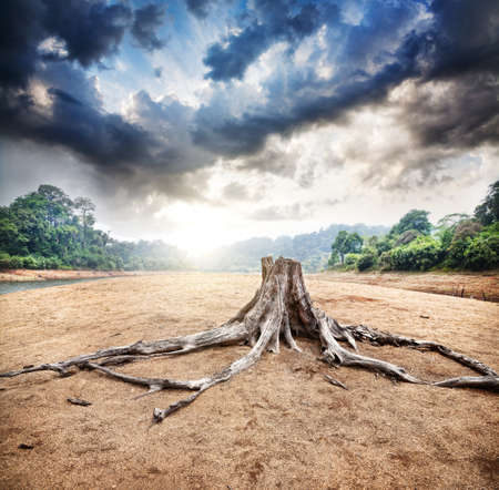 Dry stump at jungle and dramatic sky background at sunrise in Periyar wildlife sanctuary in Kerala, India Stock Photo