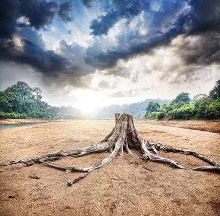 deforestacion: Tocón seco en la selva y el cielo de fondo dramático en la salida del sol en el santuario de vida silvestre Periyar, en Kerala, India Foto de archivo