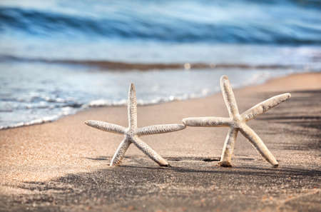 Two funny starfishes on the sandy beach at ocean background photo
