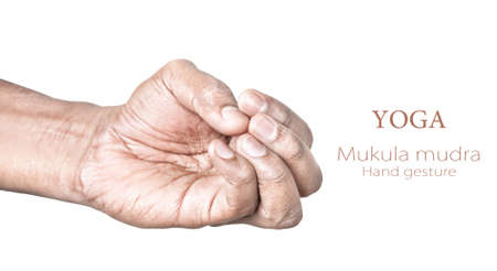 mudra: Hands in mukula beak mudra by Indian man isolated on white background. Free space for your text