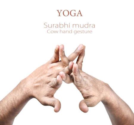 paz interior: Las manos en mudra de vaca Surabhi hombre indio aislado en el fondo blanco. Espacio libre para el texto Foto de archivo
