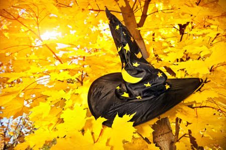 Witch hat with yellow stars on maple tree with yellow leaves in autumn  photo