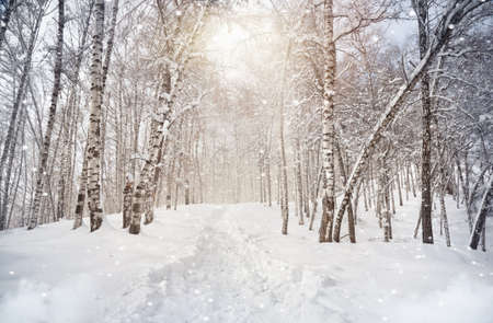 birch tree: Winter scenic of Birchwood in mountains with snowfall in Kazakhstan Stock Photo
