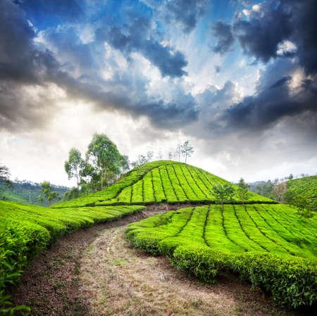 Tea valle plantación en cielo nublado dramático en Munnar, Kerala, India
