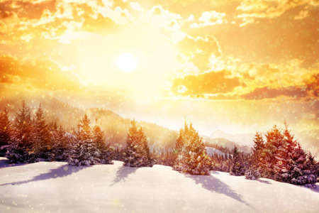 Winter scenic of spruce forest in mountains with snowfall in Kazakhstan Stock Photo
