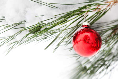 Red Christmas ball on the fir branch with snow on Christmas. Free space for your text