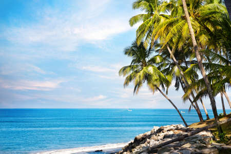 Palmas de coco en la playa cerca del océano azul en Varkala, Kerala, India