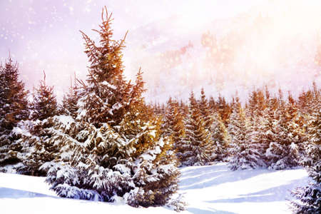 Winter scenic of spruce forest in mountains with snowfall in Kazakhstan photo