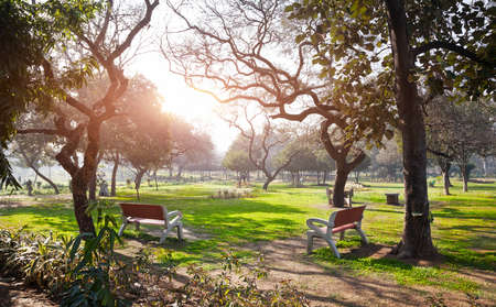 new delhi: Two benches in the Buddha Jayanti park at sunrise in New Delhi, India Stock Photo