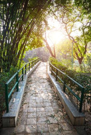 Bridge near bamboo trees in Lodi Garden, New Delhi, India