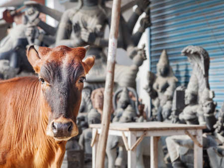 mamallapuram: Cow standing nearby statue shop on the street of Mamallapuram in Tamil Nadu, India